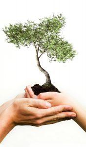 hands_tree